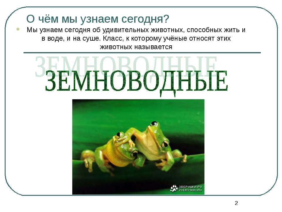 * О чём мы узнаем сегодня? Мы узнаем сегодня об удивительных животных, способ...