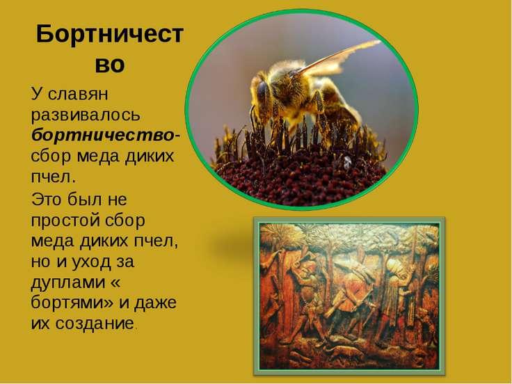 Бортничество У славян развивалось бортничество- сбор меда диких пчел. Это был...