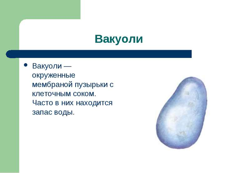 Вакуоли Вакуоли — окруженные мембраной пузырьки с клеточным соком. Часто в ни...