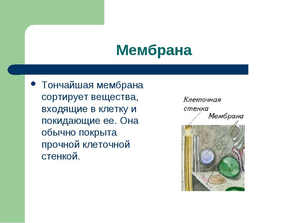 Мембрана Тончайшая мембрана сортирует вещества, входящие в клетку и покидающи...