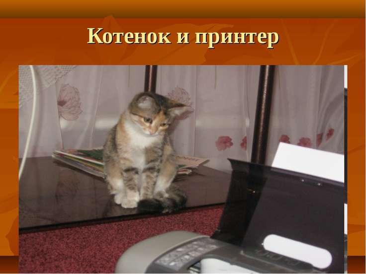 Котенок и принтер