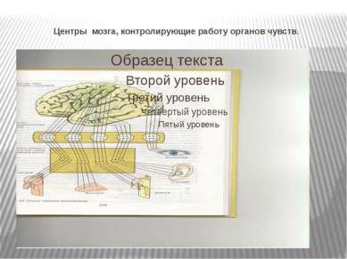Центры мозга, контролирующие работу органов чувств.