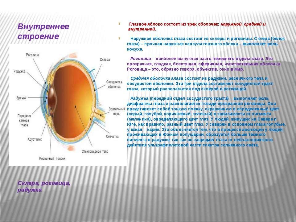 Склера, роговица, радужка Внутреннее строение органа зрения. Глазное яблоко с...