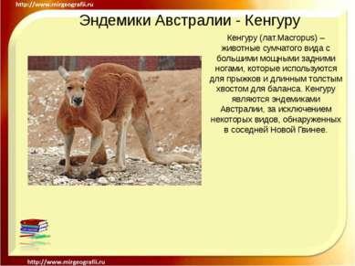 Эндемики Австралии - Кенгуру Кенгуру (лат.Macropus) – животные сумчатого вида...