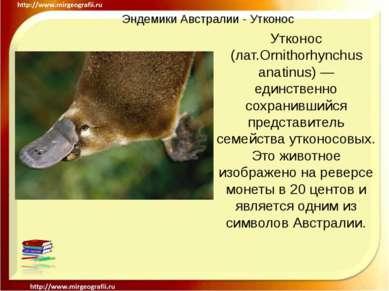 Эндемики Австралии - Утконос Утконос (лат.Ornithorhynchus anatinus) — единств...