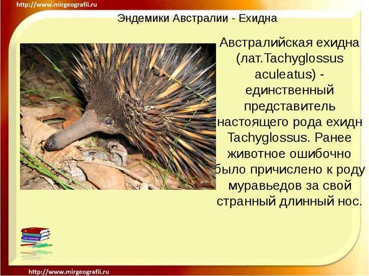 Эндемики Австралии - Ехидна Австралийская ехидна (лат.Tachyglossus aculeatus)...