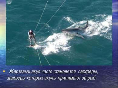 Жертвами акул часто становятся серферы, дайверы которых акулы принимают за рыб.