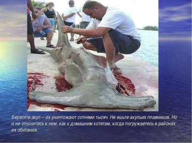 Берегите акул – их уничтожают сотнями тысяч. Не ешьте акульих плавников. Но и...