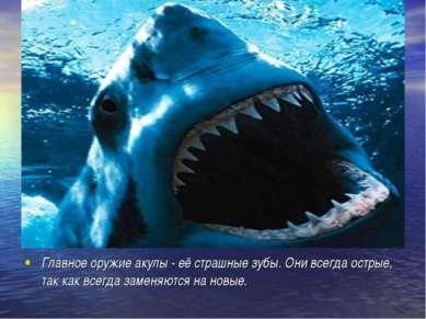 Главное оружие акулы - её страшные зубы. Они всегда острые, так как всегда за...