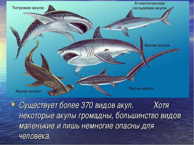 Существует более 370 видов акул. Хотя некоторые акулы громадны, большинство в...