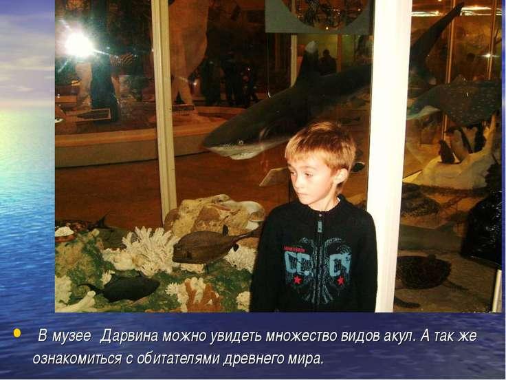 В музее Дарвина можно увидеть множество видов акул. А так же ознакомиться с о...