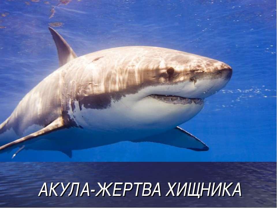 АКУЛА-ЖЕРТВА ХИЩНИКА