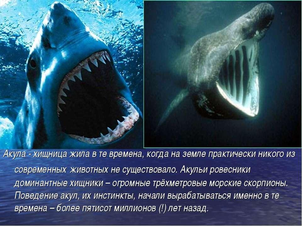 Акула - хищница жила в те времена, когда на земле практически никого из совре...