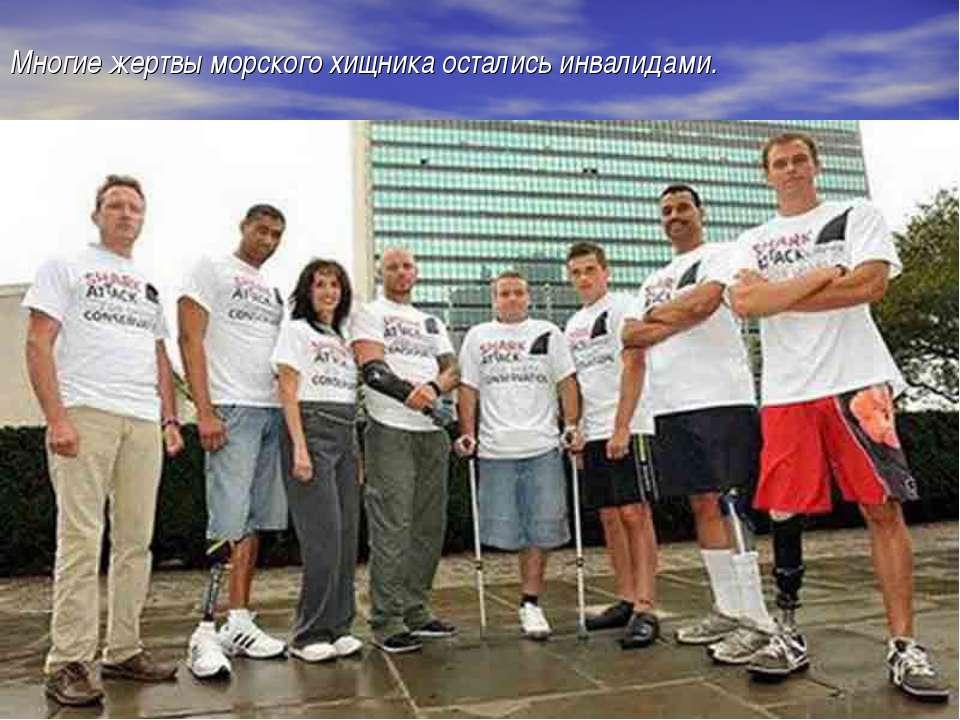 Многие жертвы морского хищника остались инвалидами.