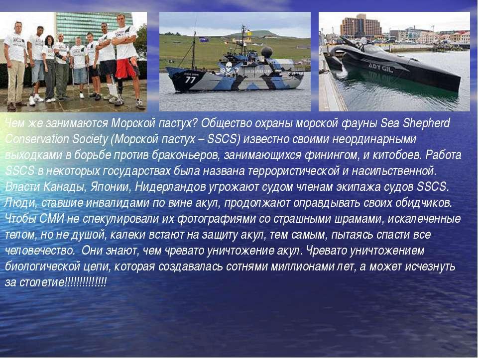 Чем же занимаются Морской пастух? Общество охраны морской фауны Sea Shepherd ...