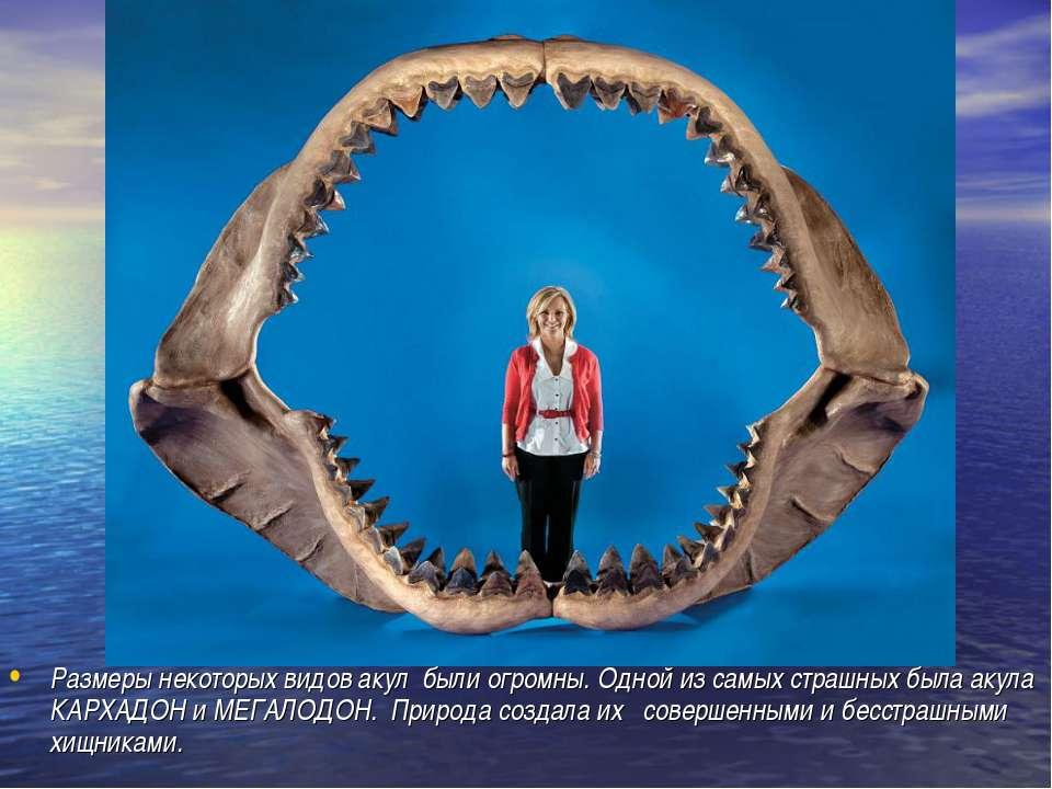 Размеры некоторых видов акул были огромны. Одной из самых страшных была акула...