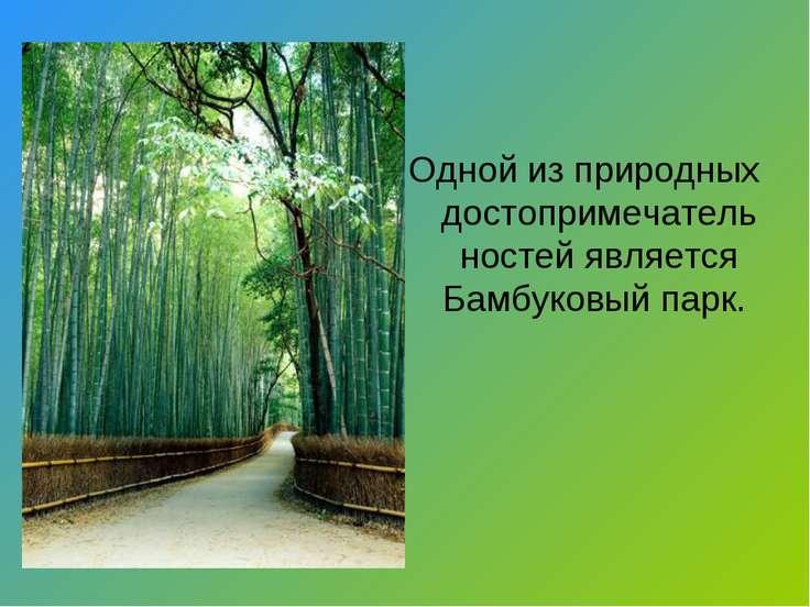 Одной из природных достопримечательностей является Бамбуковый парк.