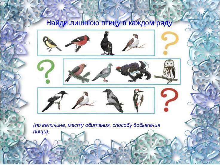 Найди лишнюю птицу в каждом ряду (по величине, месту обитания, способу добыва...
