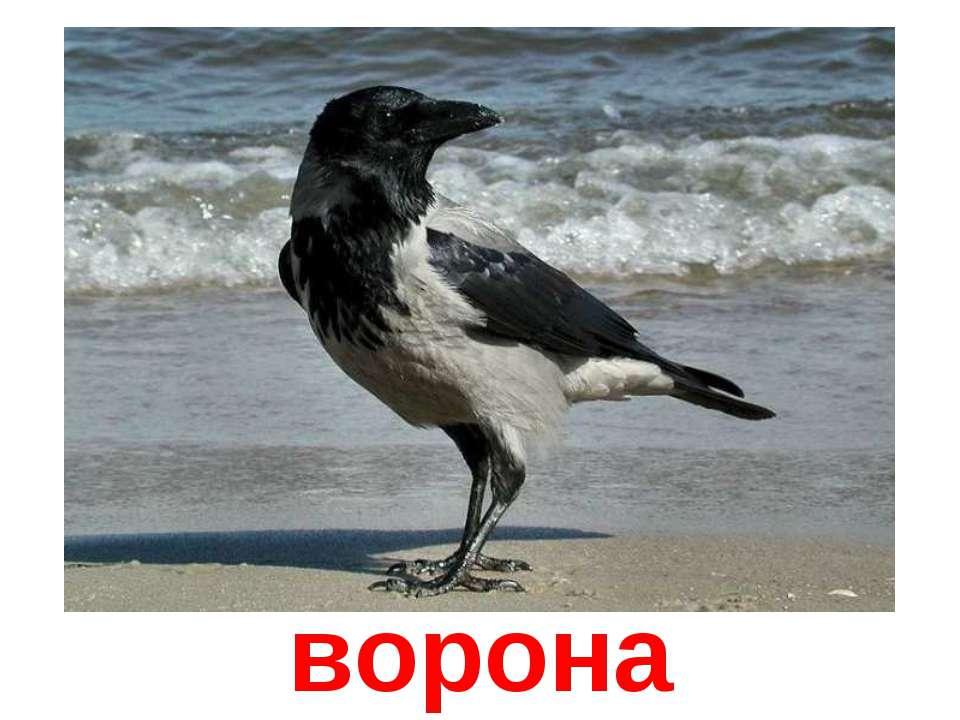 мог кра кричит ворона кража караул грабеж пропажа той