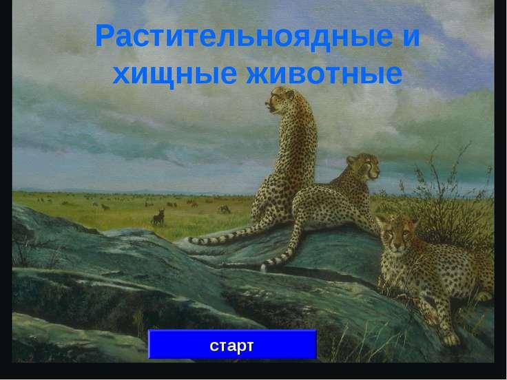 Растительноядные и хищные животные старт