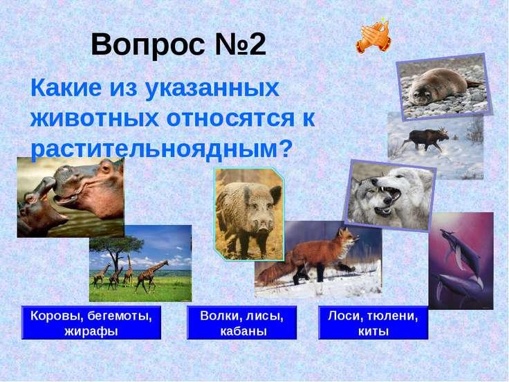 Вопрос №2 Коровы, бегемоты, жирафы Волки, лисы, кабаны Лоси, тюлени, киты Как...