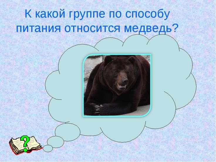 К какой группе по способу питания относится медведь?