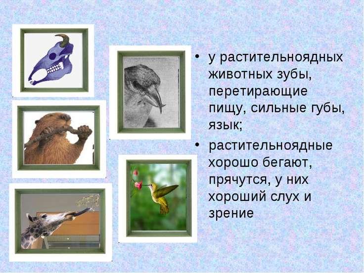 у растительноядных животных зубы, перетирающие пищу, сильные губы, язык; раст...