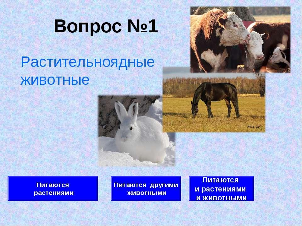Вопрос №1 Питаются растениями Питаются другими животными Питаются и растениям...