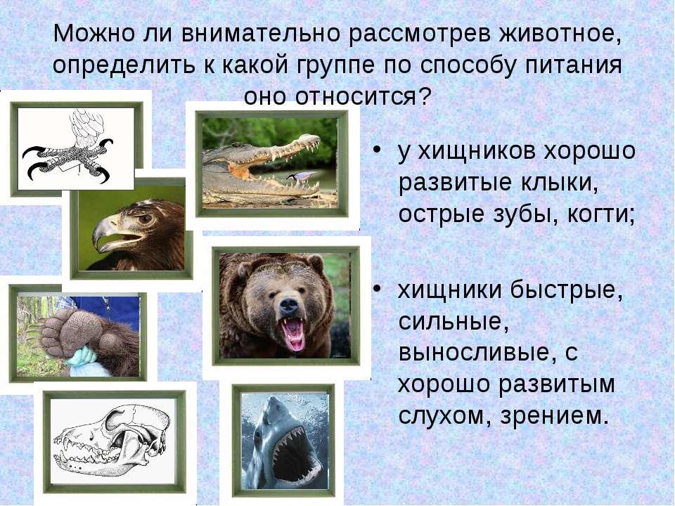 Можно ли внимательно рассмотрев животное, определить к какой группе по способ...