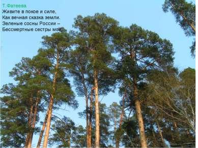 Т.Фатеева Живите в покое и силе, Как вечная сказка земли. Зеленые сосны Росси...