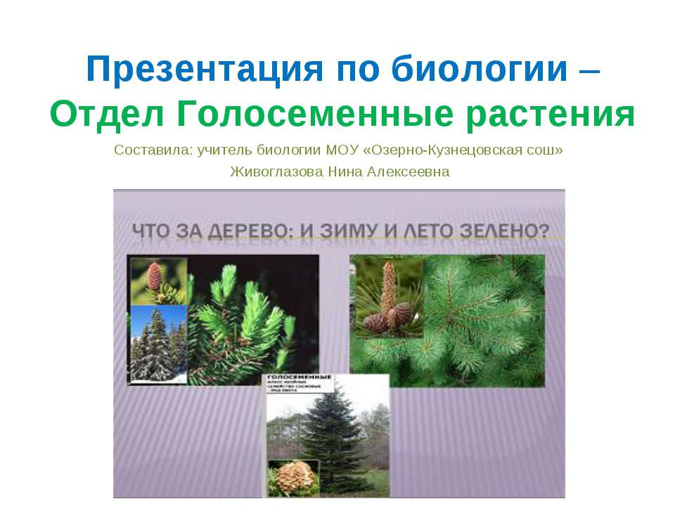 Презентация по биологии – Отдел Голосеменные растения Составила: учитель биол...