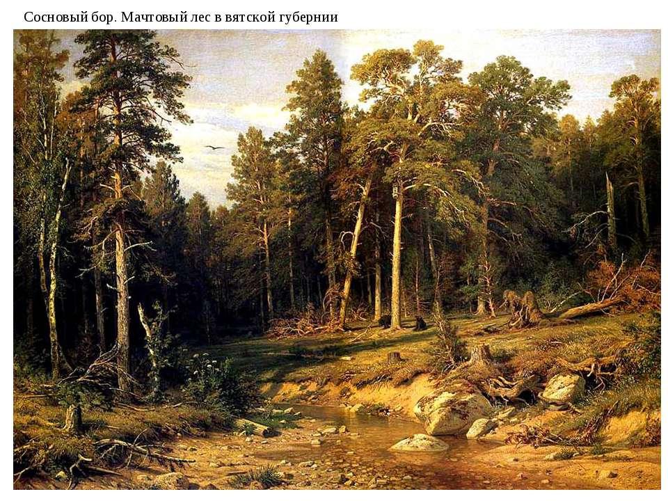 Сосновый бор. Мачтовый лес в вятской губернии