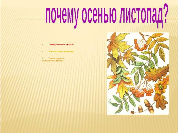 Почему желтеют листья? Как наступает листопад? Зачем деревья сбрасывают листву?