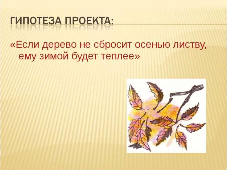 «Если дерево не сбросит осенью листву, ему зимой будет теплее»