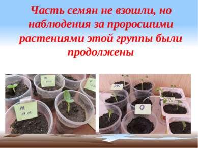 Часть семян не взошли, но наблюдения за проросшими растениями этой группы был...