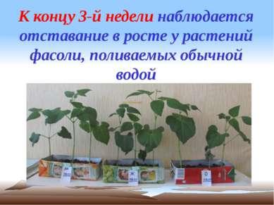 К концу 3-й недели наблюдается отставание в росте у растений фасоли, поливаем...
