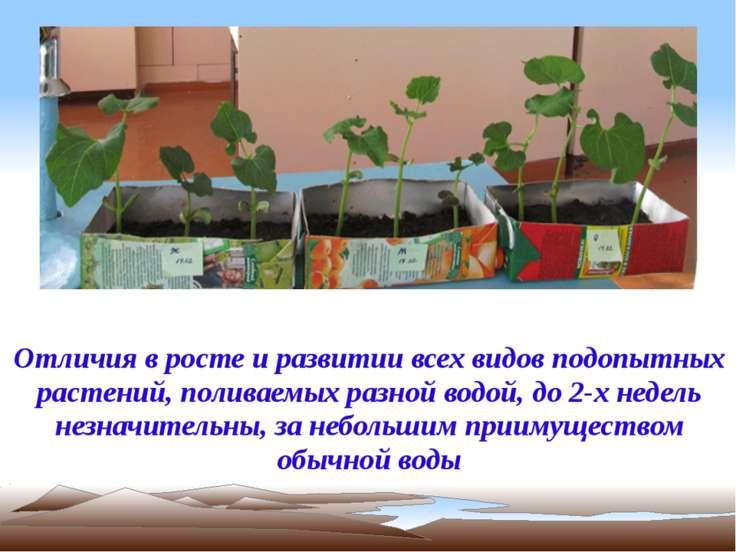 Отличия в росте и развитии всех видов подопытных растений, поливаемых разной ...