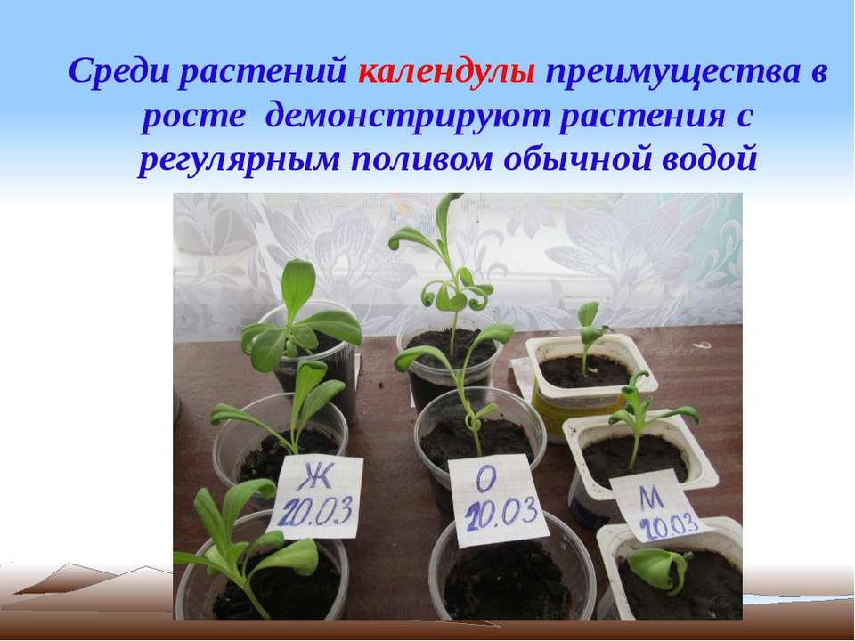 Среди растений календулы преимущества в росте демонстрируют растения с регуля...
