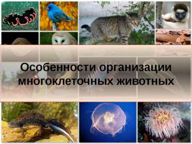 Особенности организации многоклеточных животных