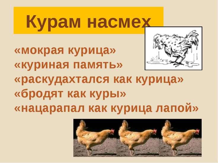 Курам насмех «мокрая курица» «куриная память» «раскудахтался как курица» «бро...