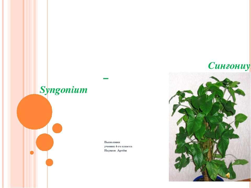 Сингониум – Syngonium Выполнил ученик 4-го класса Наумов Артём
