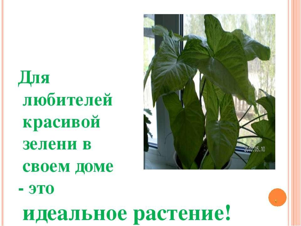 Для любителей красивой зелени в своем доме - это идеальное растение!