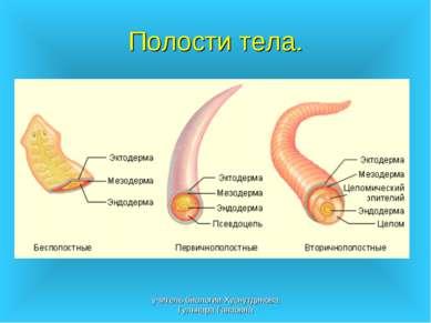 Полости тела. учитель биологии Хуснутдинова Гульнара Гаязовна учитель биологи...
