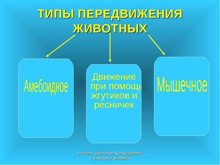 ТИПЫ ПЕРЕДВИЖЕНИЯ ЖИВОТНЫХ учитель биологии Хуснутдинова Гульнара Гаязовна уч...