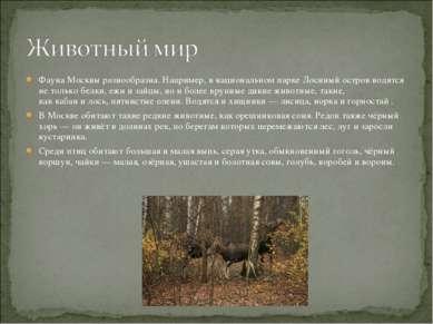 Фауна Москвы разнообразна. Например, в национальном паркеЛосиный островводя...