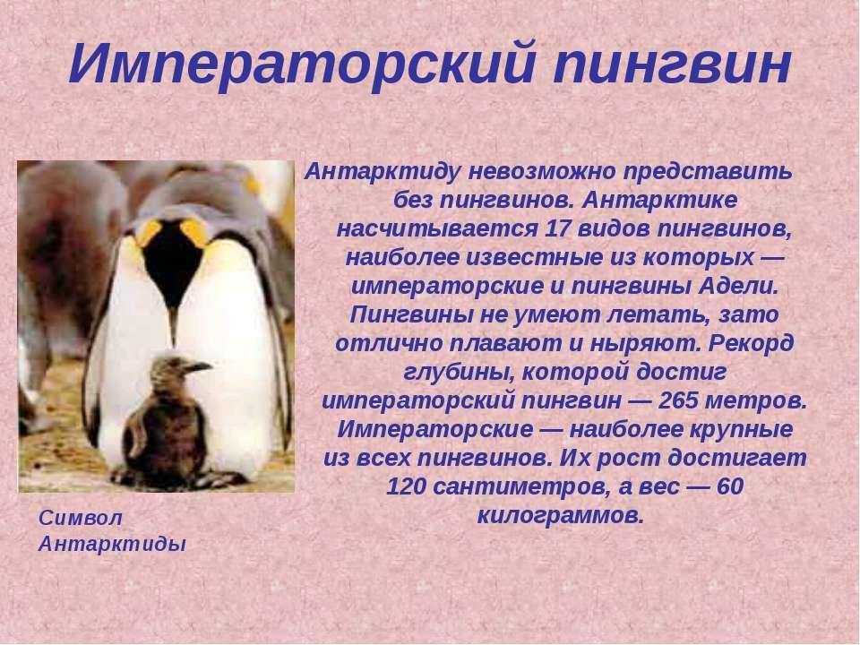 Императорский пингвин Антарктиду невозможно представить без пингвинов. Антарк...