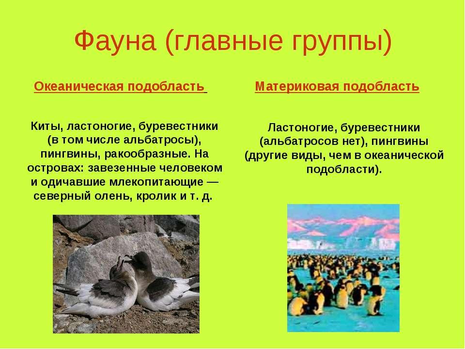 Фауна (главные группы) Океаническая подобласть Материковая подобласть Киты, л...
