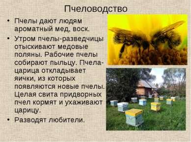 Пчеловодство Пчелы дают людям ароматный мед, воск. Утром пчелы-разведчицы оты...