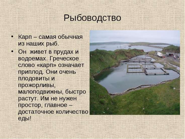Рыбоводство Карп – самая обычная из наших рыб. Он живет в прудах и водоемах. ...