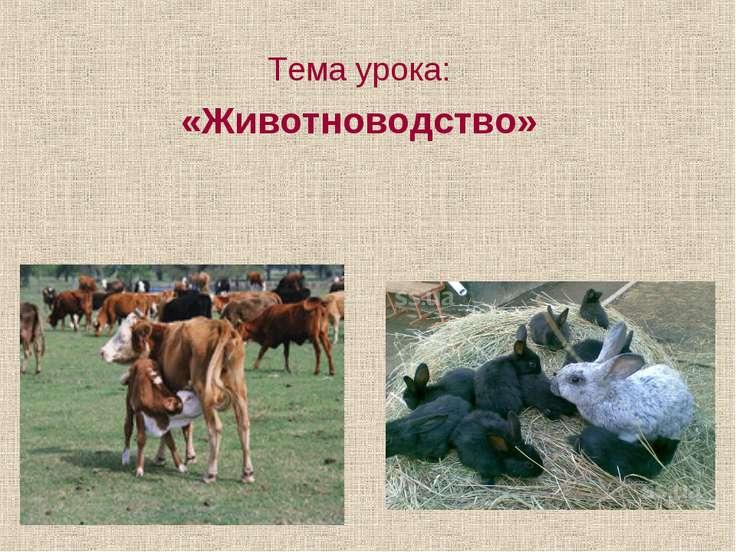 Тема урока: «Животноводство»